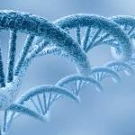 Gènes | selkirkrex.ca