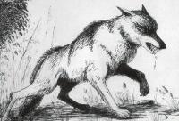 Le loup et la rage | Le loup, Seigneur des Forêts et de mon Coeur