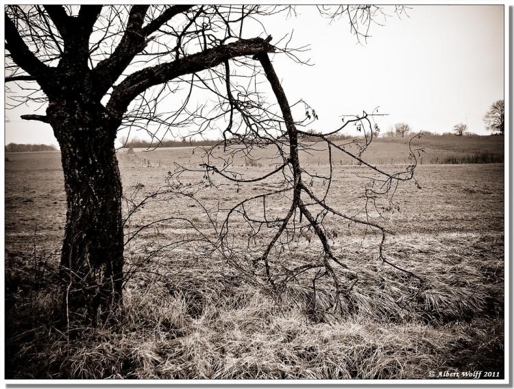 La branche cassée, par Albert Wolff, 2011